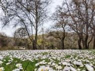 springtime in Sinemorets