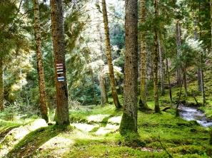 Märchenwald im Bajumi National Park