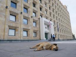 der perfekte Wachhund für das Kanzleramt