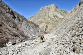 Wandergefährte ins Truso Valley