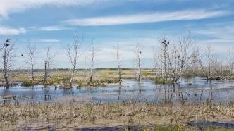 Sumpf und noch mehr Sumpf, perfekte Brutstätte für Mosquitos