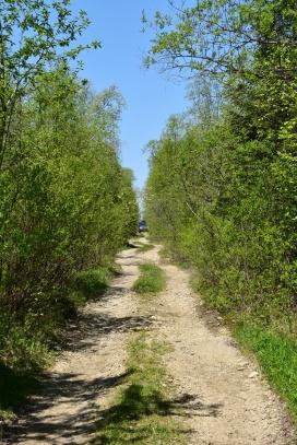 durchs Gebüsch zum Baikal