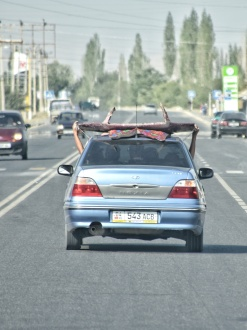 innovative Dachträger
