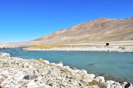 Kamele auf 3900m, allerdings auf der afghanischen Seite