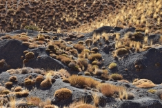 auch auf 2700m Seehöhe gibt es noch Vegetation