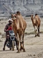 mobile Kamelhirten auf Qeshm