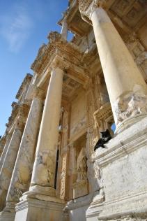 Katze Nummer 3 nimmts ganz gelassen in Ephesus