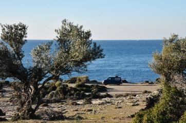 schicker Stellplatz zwischen den Olivenbäumen